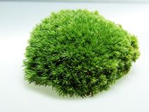 Green Moss Decoration floristry Royalty Free Stock Photography