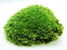 Green Moss Decoration floristry Stock Photography