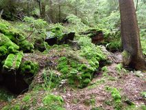 Beautiful green moss on stones in the forest stock photos