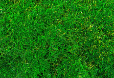 Beautiful green moss texture close-up , background with copy space. Stock Images