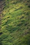 Beautiful green mountain grass Stock Photos