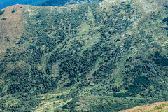 Beautiful green mountain landscape Stock Photography