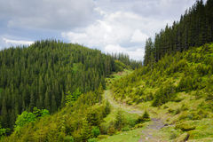 Beautiful green mountain. The majestic hills covered with coniferous wood. There is a road between the hills. The sky is cloudy Royalty Free Stock Image