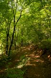 Beautiful green forest full of trees flowers plants insects animals summer in spring in winter Stock Image