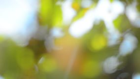 Beautiful green nature background. Sun shines through blowing on wind green leaves. stock footage