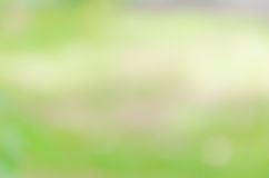 beautiful green nature bokeh abstract for background Royalty Free Stock Photography