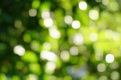 Green nature bokeh background. Beautiful green nature bokeh background royalty free stock image