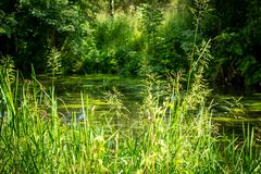 Beautiful green nature at the canal in Scotland. UK royalty free stock photo