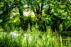 Beautiful, green nature at the Monklands canal in Coatbridge, Scotland. UK royalty free stock photography