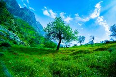 Beautiful green nature / one tree between grass. / photo at 12 PM in Iran royalty free stock image