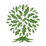 Beautiful green oak tree silhouette isolated on white background. Royalty Free Stock Images