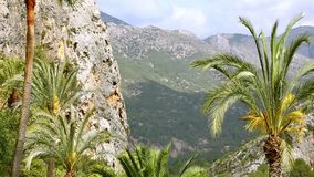 Beautiful green oasis with palm trees in rocky canyon. HD stock video