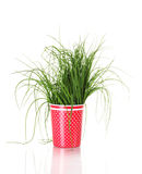 Beautiful green onion Stock Photography