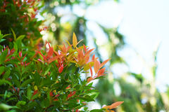 Beautiful green and orange 、red leaves and sunshine Stock Photography