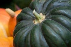Beautiful green and orange pumpkin. Prepared for storage royalty free stock photos