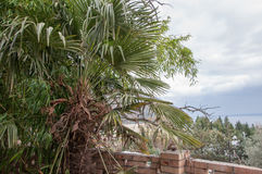 Beautiful green palm branches close up. In high quality Royalty Free Stock Photos