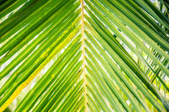 Beautiful green palm leaves Royalty Free Stock Photos