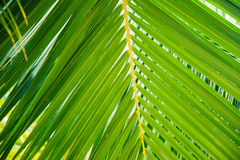 Beautiful green palm leaves Stock Photo