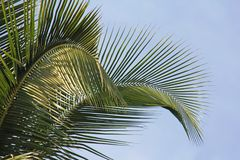 Beautiful green palm leaves. Tropical exotic landscape. Design w stock images