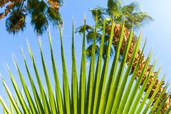 Beautiful green palm tree leave texture close up details royalty free stock photos