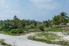 Beautiful green palm trees forest near the village road at the tropical island Maamigili. In Maldives stock photos