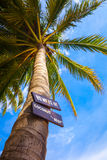 Beautiful green palm on tropical island with sign beware coconut drop Stock Photos