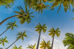 Amazing tropical beach scene and palm trees and blue sky for tropical beach background. Beautiful green palms under blue sky. Relaxing tropics landscape. Calm Royalty Free Stock Image