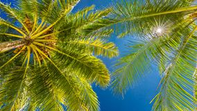 Amazing tropical beach scene and palm trees and blue sky for tropical beach background. Beautiful green palms under blue sky. Relaxing tropics landscape. Calm Royalty Free Stock Images