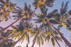 Amazing tropical beach scene and palm trees and blue sky for tropical beach background. Beautiful green palms under blue sky. Relaxing tropics landscape. Calm Royalty Free Stock Photo