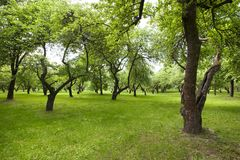 Beautiful green park. Royalty Free Stock Photos
