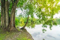 Beautiful green park with lake , Ang Kaew at Chiang Mai Universi Royalty Free Stock Images