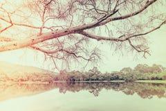 Beautiful green park with lake , Ang Kaew at Chiang Mai Universi Royalty Free Stock Photo
