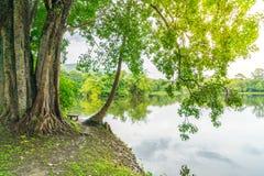 Beautiful green park with lake , Ang Kaew at Chiang Mai Universi Royalty Free Stock Photography