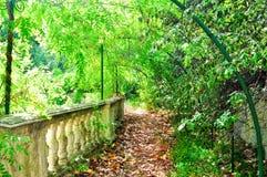 Beautiful green park Stock Images
