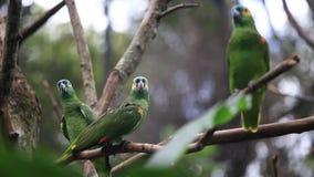 Beautiful green parrot birds on tree branch in bird park, Foz do Iguacu