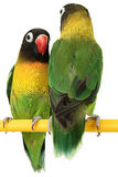 Beautiful green parrot Royalty Free Stock Image