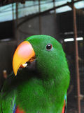 Beautiful green parrot. In zoo Royalty Free Stock Photography