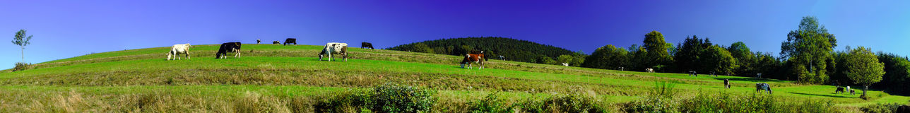Beautiful green pasturage in Alsace, France Royalty Free Stock Photo