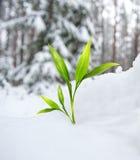 Beautiful green plant Stock Photo