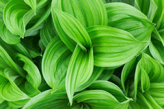 Beautiful green plant Stock Photography