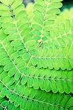 Beautiful green plant Royalty Free Stock Images