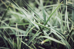 Beautiful green plants Stock Images
