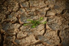 Green plants with cracked soil surface. The beautiful green plants in the middle of a hard cracked soil surface stylish photograph Stock Image