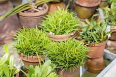 Beautiful green plants  in the Sofia Botanical Garden Royalty Free Stock Photo