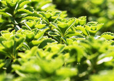 Beautiful green plants. Summer beautiful green plants in the park Royalty Free Stock Photos