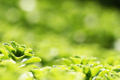 Beautiful green plants. Summer beautiful green plants in the park Stock Image