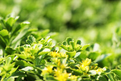 Beautiful green plants. Summer beautiful green plants in the park Stock Images