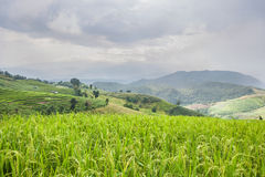 Beautiful green rice field terrace with rain cloud and mountain. Stock Photos