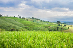 Beautiful green rice field terrace with rain cloud and mountain. Royalty Free Stock Photos