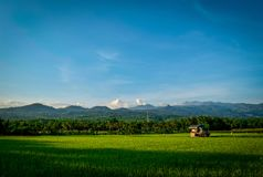 Beautiful green rice fields in the countryside stock photography